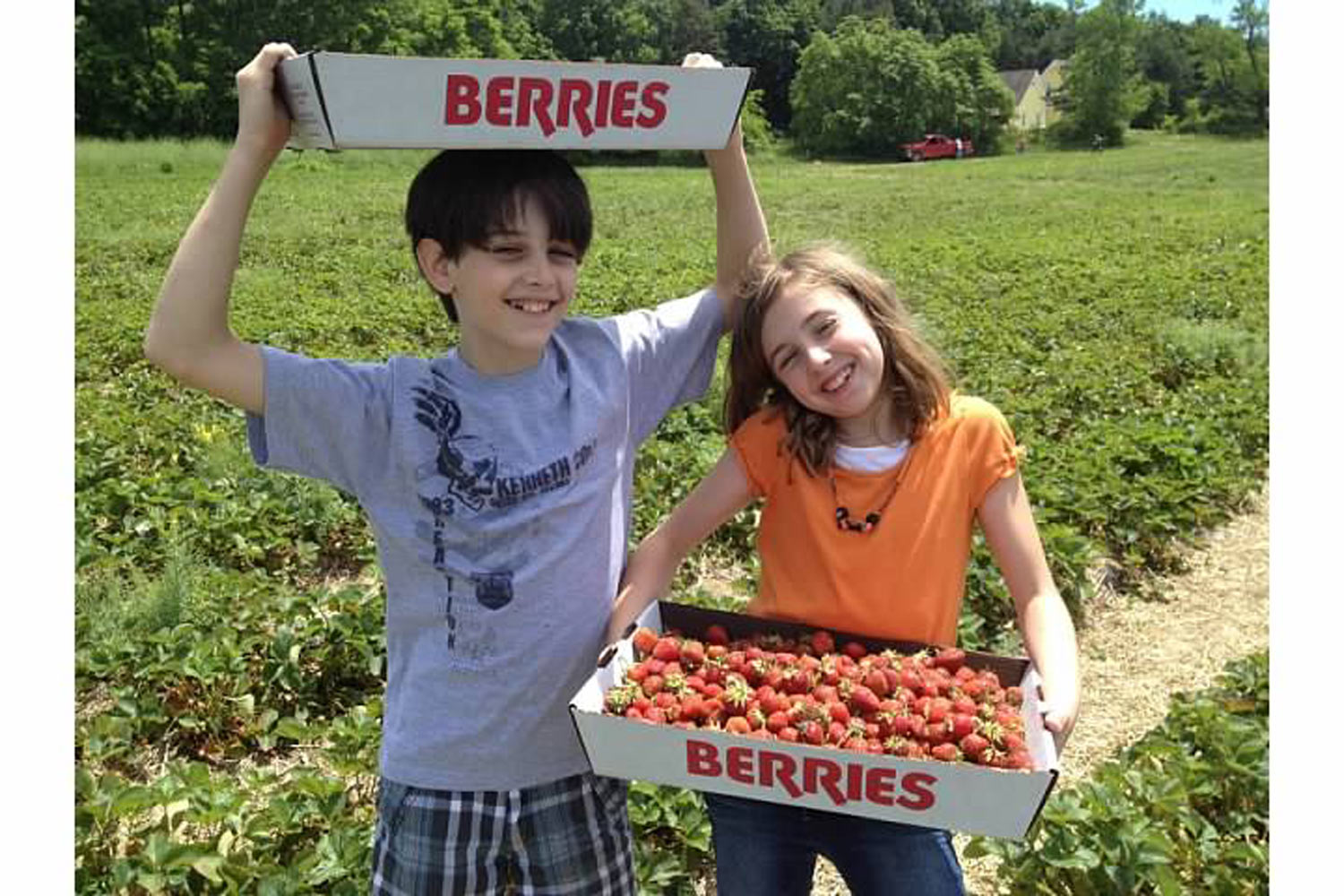 Pick Your Own Strawberry Farms In Southeast Michigan Edible Wow