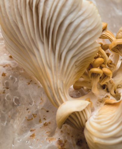 Business is Mushrooming at the Detroit Mushroom Company | Edible WOW