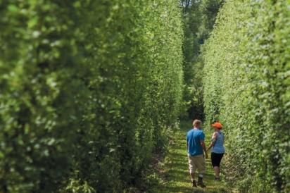 hops farms