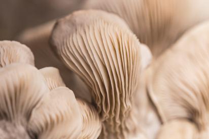 Manure Based Mushroom Substrate Recipe