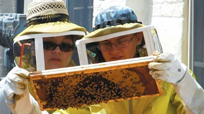 beekeepers