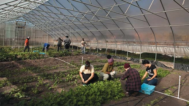 gardening in the greenhouse