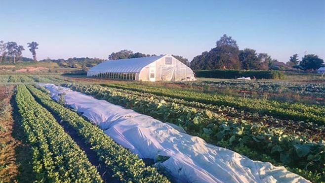 Hand Sown Farm